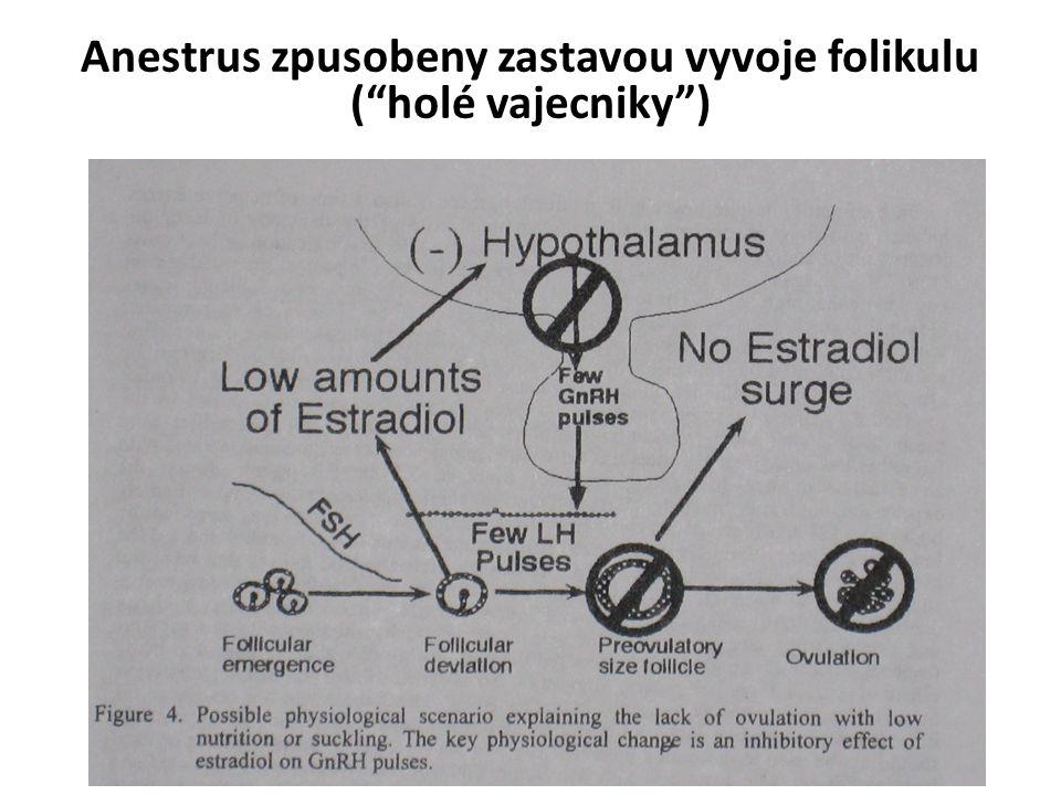 Anestrus zpusobeny zastavou vyvoje folikulu ( holé vajecniky )