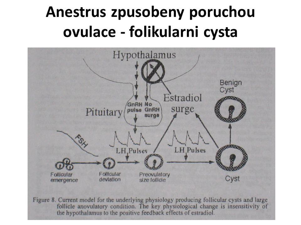 Anestrus zpusobeny poruchou ovulace - folikularni cysta
