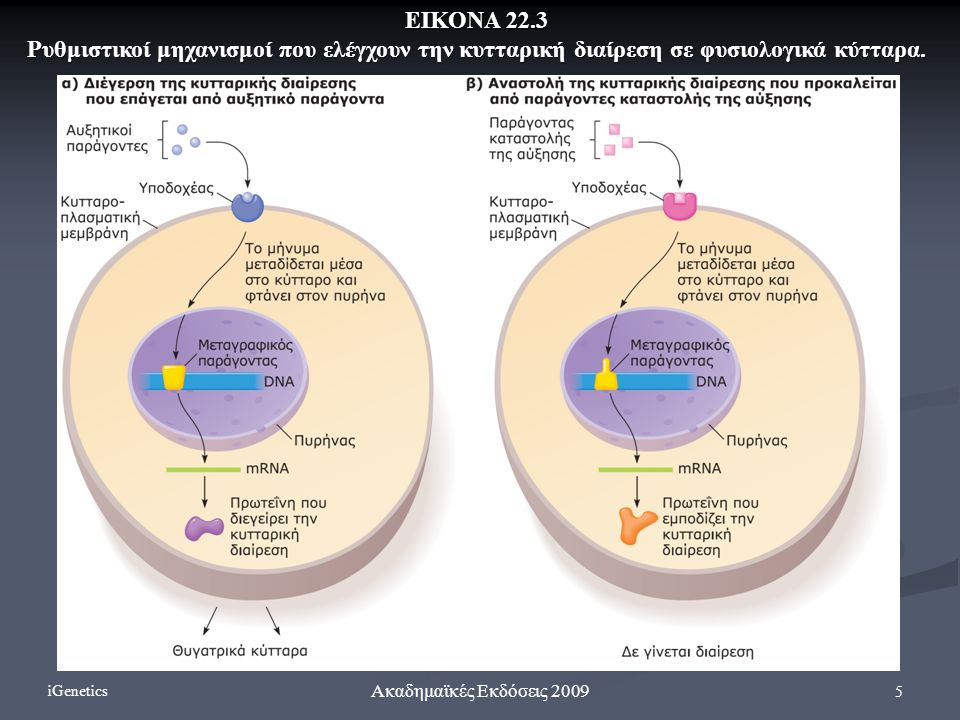 5 Ακαδημαϊκές Εκδόσεις 2009 ΕΙΚΟΝΑ 22.3 Ρυθμιστικοί μηχανισμοί που ελέγχουν την κυτταρική διαίρεση σε φυσιολογικά κύτταρα. iGenetics