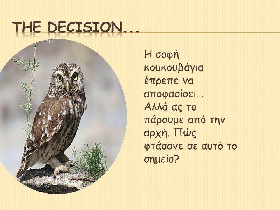 Η σοφή κουκουβάγια έπρεπε να αποφασίσει… Αλλά ας το πάρουμε από την αρχή.