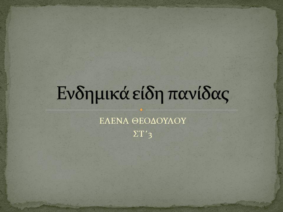 ΕΛΕΝΑ ΘΕΟΔΟΥΛΟΥ ΣΤ΄3