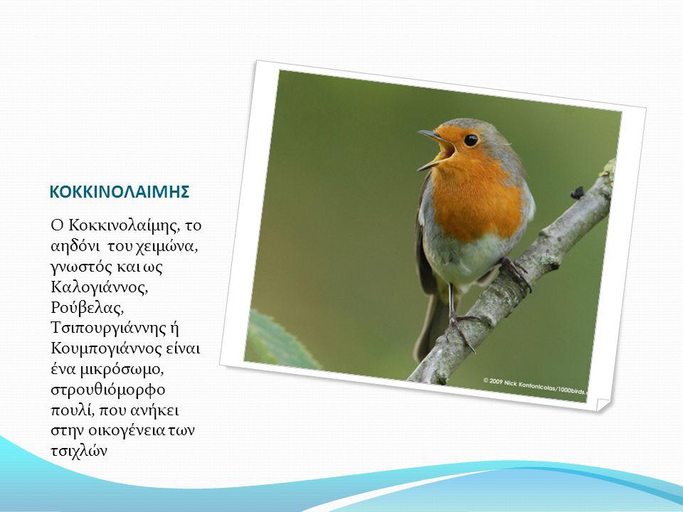 ΚΟΚΚΙΝΟΛΑΙΜΗΣ Ο Κοκκινολαίμης, το αηδόνι του χειμώνα, γνωστός και ως Καλογιάννος, Ρούβελας, Τσιπουργιάννης ή Κουμπογιάννος είναι ένα μικρόσωμο, στρουθ