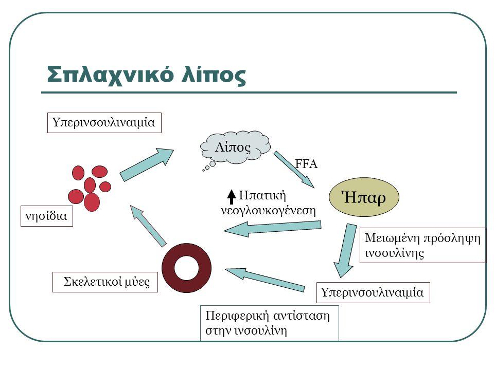 Σπλαχνικό λίπος Λίπος FFA Ήπαρ Μειωμένη πρόσληψη ινσουλίνης Υπερινσουλιναιμία Ηπατική νεογλουκογένεση Περιφερική αντίσταση στην ινσουλίνη Σκελετικοί μύες νησίδια Υπερινσουλιναιμία