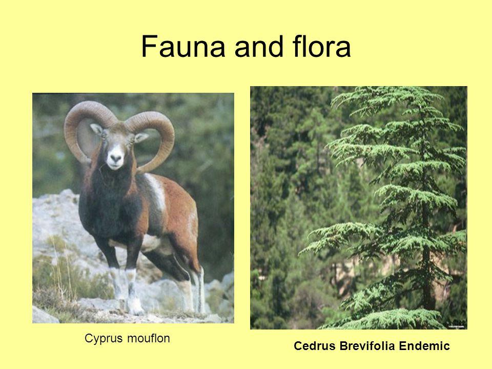 Fauna and flora Cyprus mouflon Cedrus Brevifolia Endemic