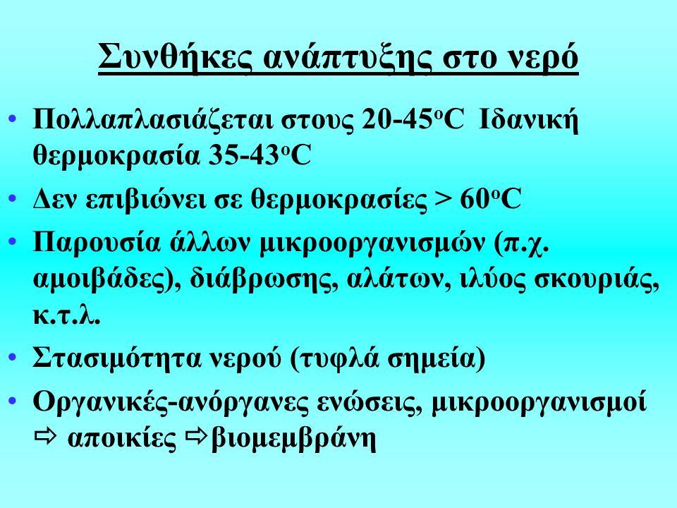 Συνθήκες ανάπτυξης στο νερό Πολλαπλασιάζεται στους 20-45 ο C Ιδανική θερμοκρασία 35-43 ο C Δεν επιβιώνει σε θερμοκρασίες > 60 ο C Παρουσία άλλων μικροοργανισμών (π.χ.