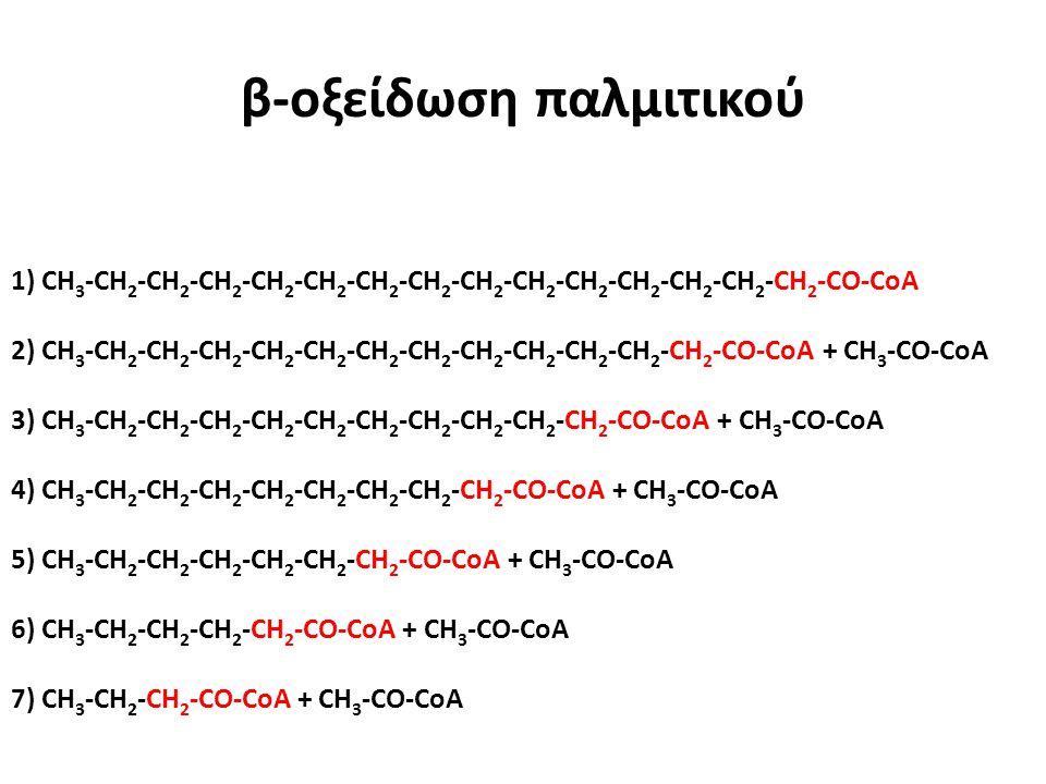 β-οξείδωση παλμιτικού 1) CH 3 -CH 2 -CH 2 -CH 2 -CH 2 -CH 2 -CH 2 -CH 2 -CH 2 -CH 2 -CH 2 -CH 2 -CH 2 -CH 2 -CH 2 -CO-CoA 2) CH 3 -CH 2 -CH 2 -CH 2 -C