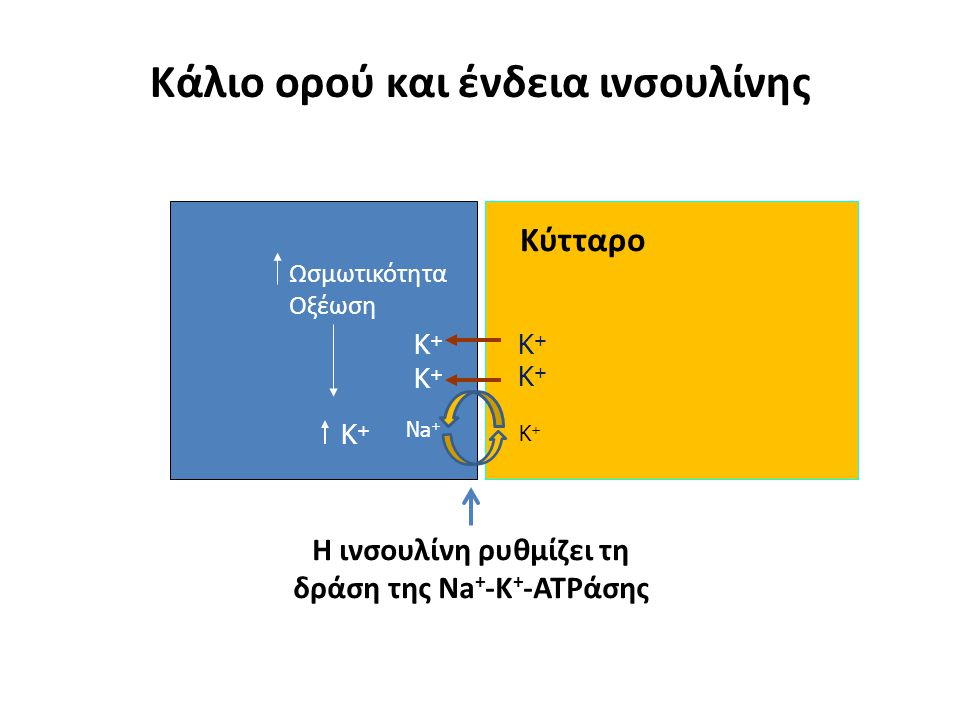 Κάλιο ορού και ένδεια ινσουλίνης K+K+ Ωσμωτικότητα Οξέωση K+K+ Η ινσουλίνη ρυθμίζει τη δράση της Na + -K + -ATPάσης Na + K+K+ K+K+ K+K+ K+K+ Κύτταρο