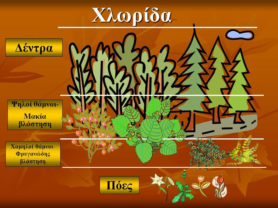 Δέντρα Ψηλοί θάμνοι- Μακία βλάστηση Χαμηλοί θάμνοι- Φρυγανώδης βλάστηση ΠόεςΧλωρίδα