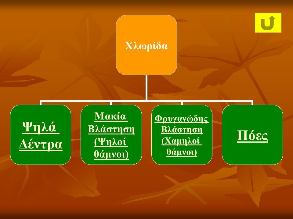 Χλωρίδα Ψηλά Δέντρα Μακία Βλάστηση (Ψηλοί θάμνοι) Φρυγανώδης Βλάστηση (Χαμηλοί θάμνοι) Πόες