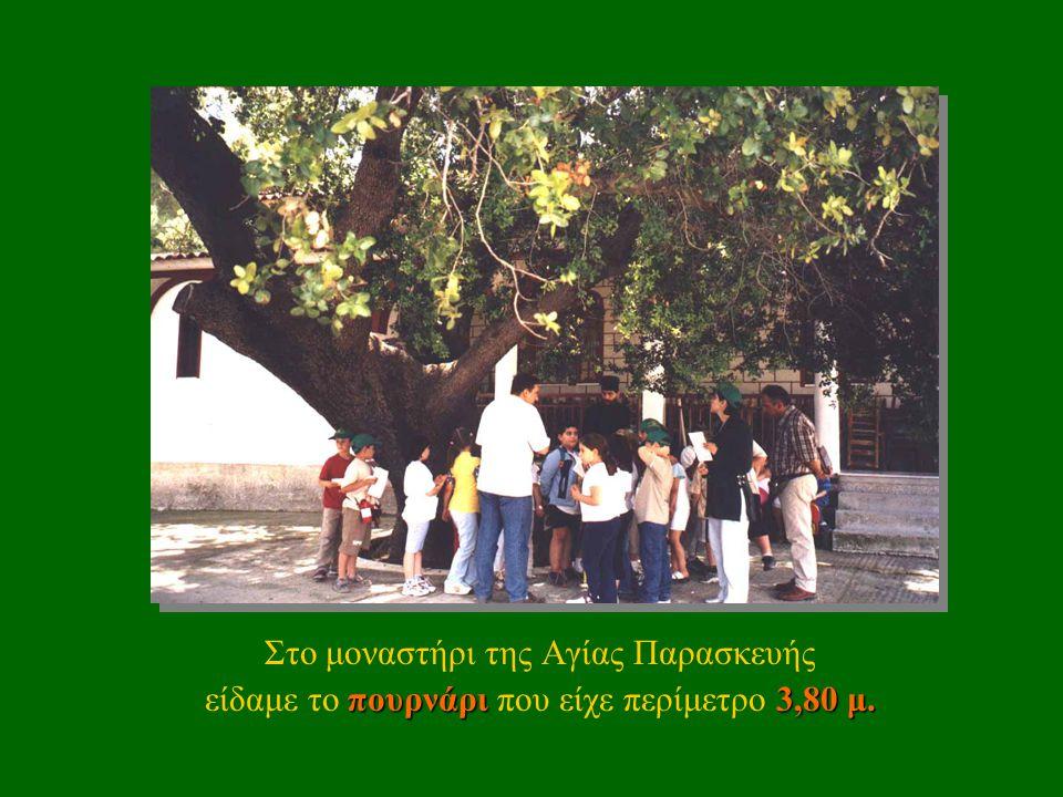 …παρατηρήσαμε τα δέντρα και τους θάμνους… …και ακούσαμε τα πουλιά που κελαηδούσαν