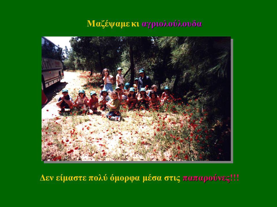 Πήγαμε και στο Ίδρυμα Δαμιανός στο Σχίνο Λουτρακίου, ροδόκηπο750τριανταφυλλιές όπου είδαμε έναν ροδόκηπο με 750 τριανταφυλλιές!!!