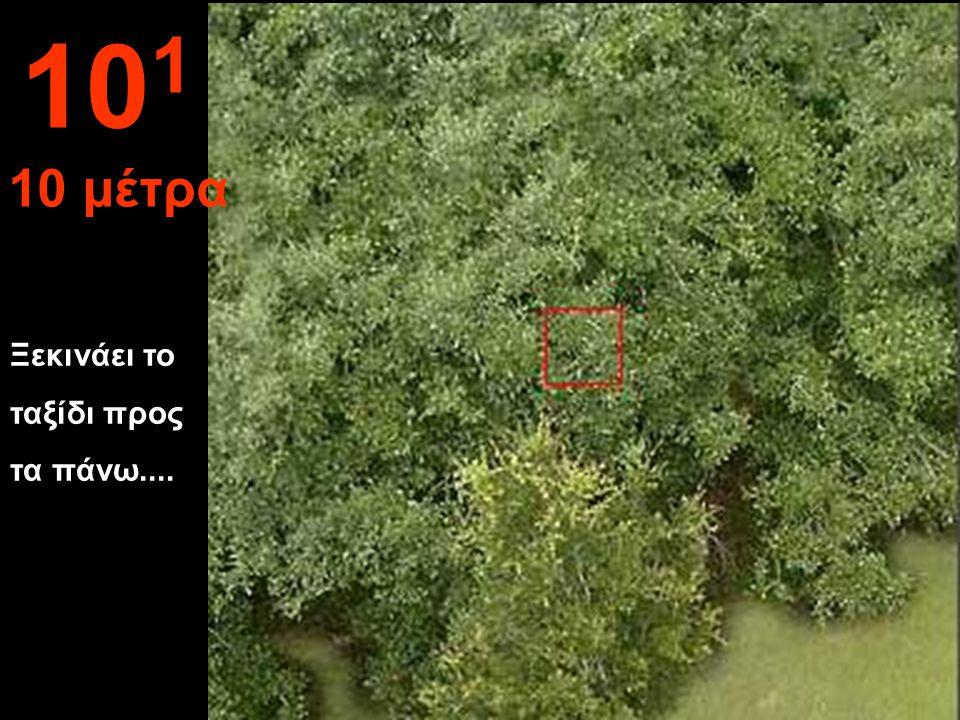Απόσταση από μερικά φύλλα στον κήπο 10 0 1 μέτρο