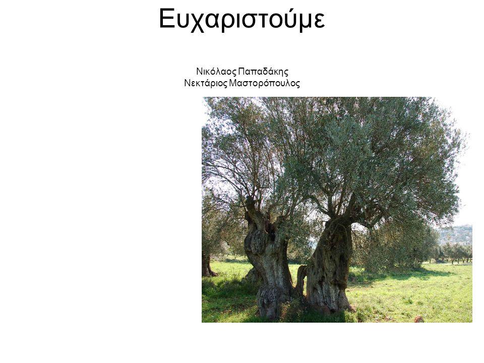 Ευχαριστούμε Νικόλαος Παπαδάκης Νεκτάριος Μαστορόπουλος