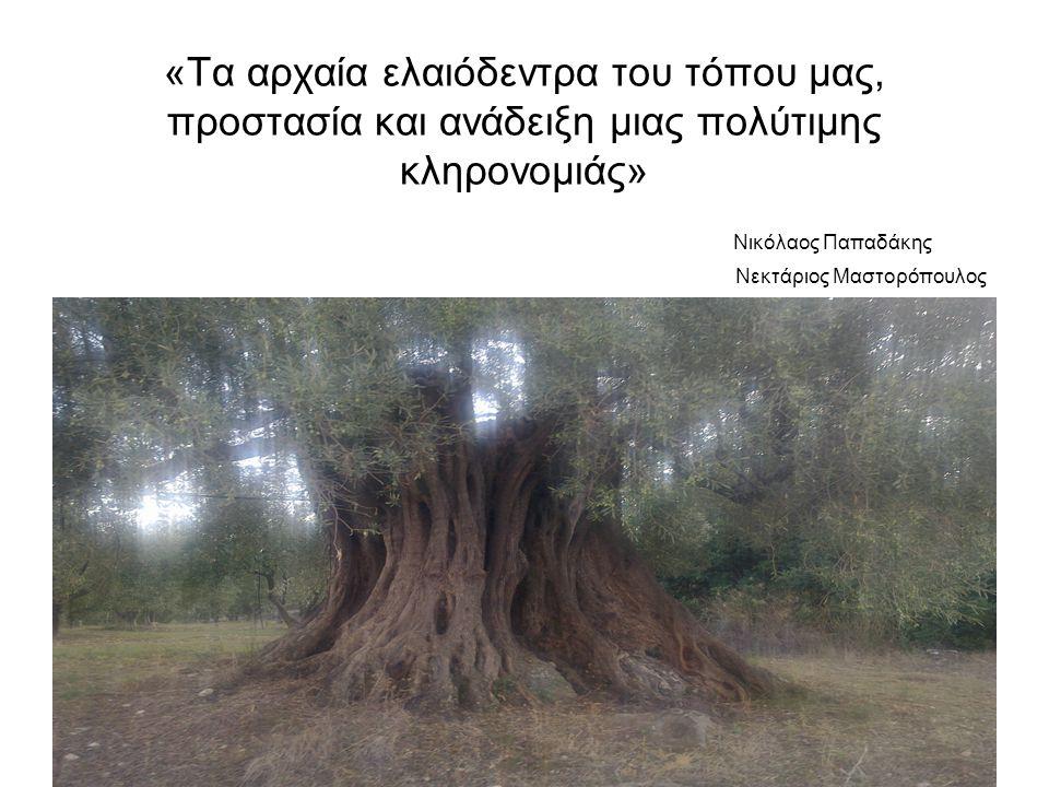 «Τα αρχαία ελαιόδεντρα του τόπου μας, προστασία και ανάδειξη μιας πολύτιμης κληρονομιάς» Νικόλαος Παπαδάκης Νεκτάριος Μαστορόπουλος