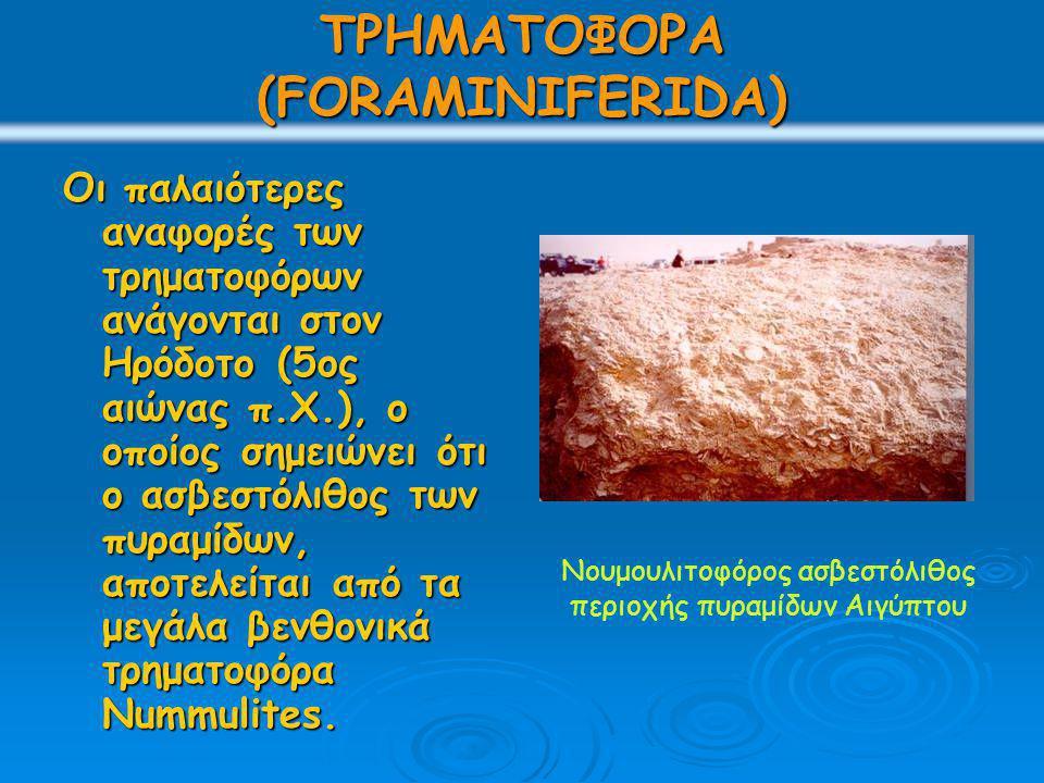 ΤΡΗΜΑΤΟΦΟΡΑ (FORAMINIFERIDA) Οι παλαιότερες αναφορές των τρηματοφόρων ανάγονται στον Ηρόδοτο (5ος αιώνας π.Χ.), ο οποίος σημειώνει ότι ο ασβεστόλιθος