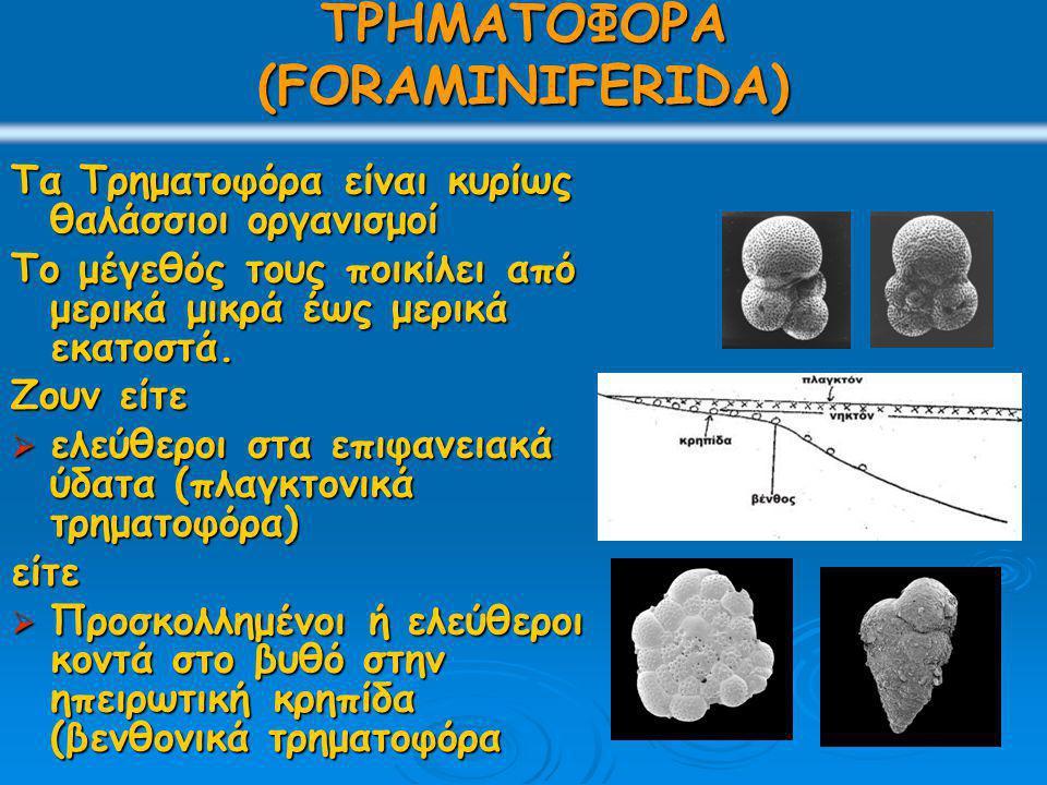 ΤΡΗΜΑΤΟΦΟΡΑ (FORAMINIFERIDA) Τα Τρηματοφόρα είναι κυρίως θαλάσσιοι οργανισμοί Το μέγεθός τους ποικίλει από μερικά μικρά έως μερικά εκατοστά. Ζουν είτε
