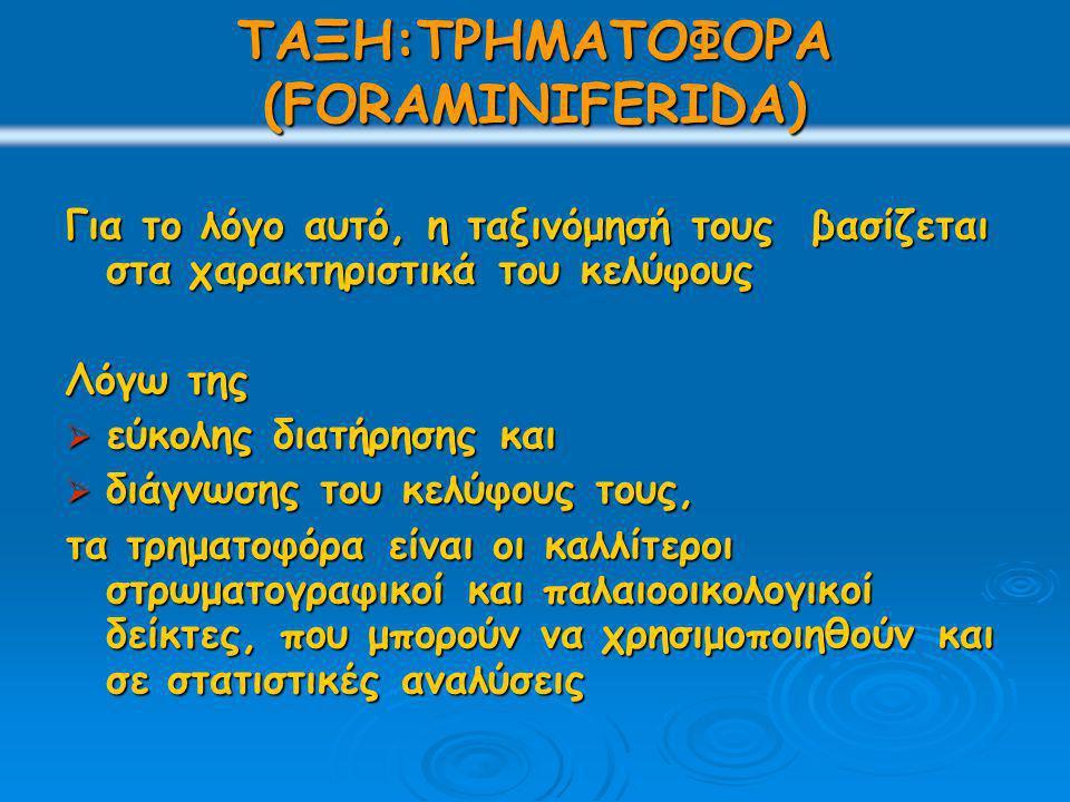 ΤΑΞΗ:ΤΡΗΜΑΤΟΦΟΡΑ (FORAMINIFERIDA) Για το λόγο αυτό, η ταξινόμησή τους βασίζεται στα χαρακτηριστικά του κελύφους Λόγω της  εύκολης διατήρησης και  διάγνωσης του κελύφους τους, τα τρηματοφόρα είναι οι καλλίτεροι στρωματογραφικοί και παλαιοοικολογικοί δείκτες, που μπορούν να χρησιμοποιηθούν και σε στατιστικές αναλύσεις