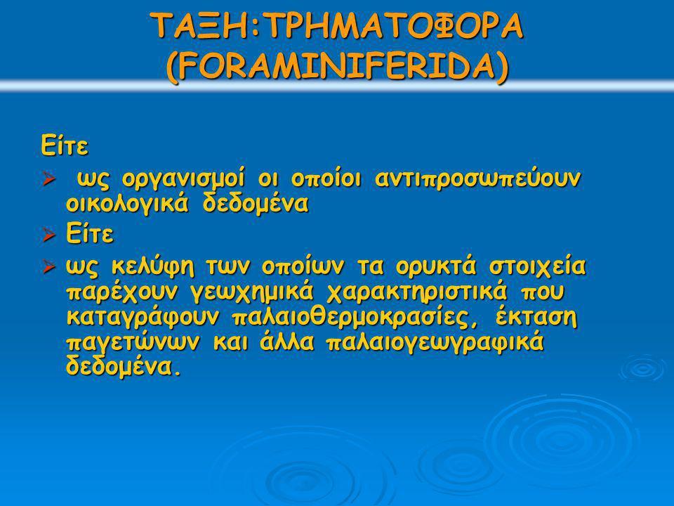 ΤΡΗΜΑΤΟΦΟΡΑ (FORAMINIFERIDA) Οι παλαιότερες αναφορές των τρηματοφόρων ανάγονται στον Ηρόδοτο (5ος αιώνας π.Χ.), ο οποίος σημειώνει ότι ο ασβεστόλιθος των πυραμίδων, αποτελείται από τα μεγάλα βενθονικά τρηματοφόρα Nummulites.