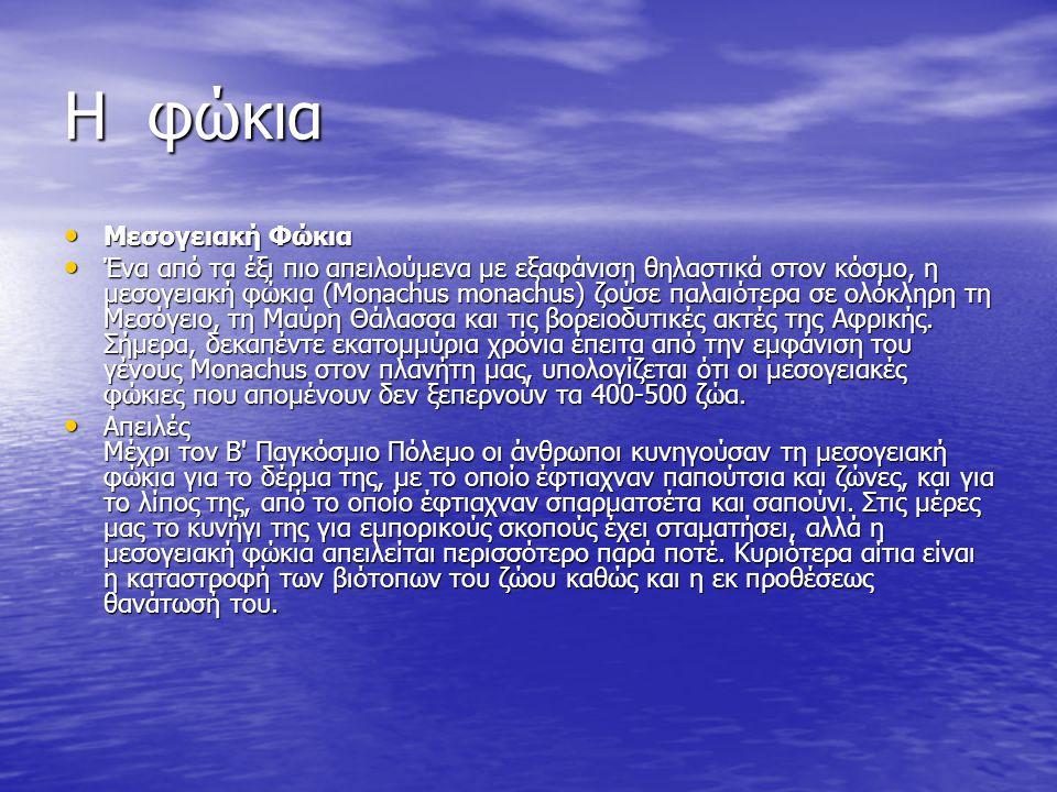 Η φώκια Μεσογειακή Φώκια Μεσογειακή Φώκια Ένα από τα έξι πιο απειλούμενα με εξαφάνιση θηλαστικά στον κόσμο, η μεσογειακή φώκια (Monachus monachus) ζούσε παλαιότερα σε ολόκληρη τη Μεσόγειο, τη Μαύρη Θάλασσα και τις βορειοδυτικές ακτές της Αφρικής.