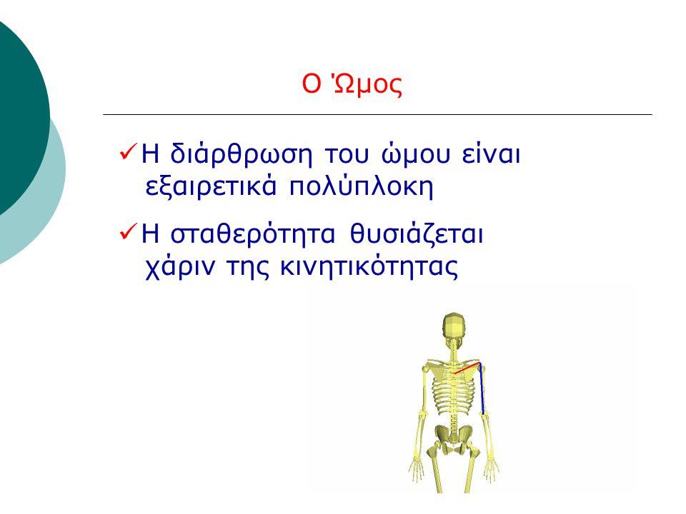 4 οστά (κλείδα, ωμοπλάτη, βραχιόνιο, πλευρά) 4 αρθρώσεις (ΑΚ, ΣΚ, ΓΒ, ΩΘ )