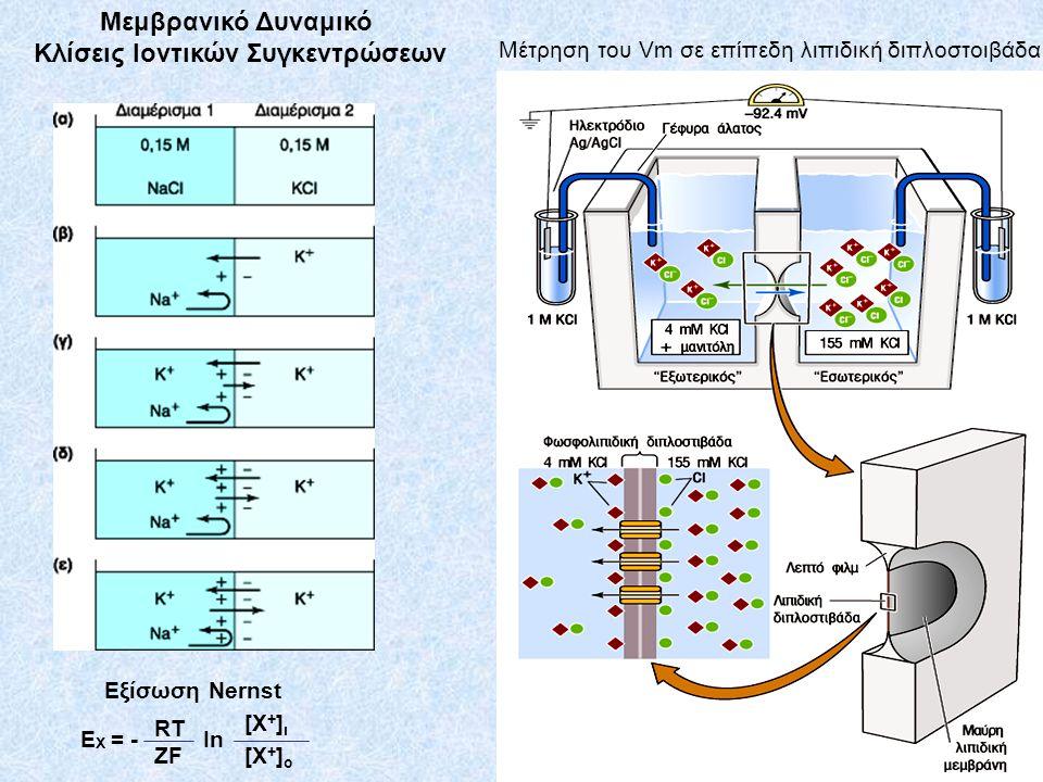 Μεμβρανικό Δυναμικό Κλίσεις Ιοντικών Συγκεντρώσεων Μέτρηση του Vm σε επίπεδη λιπιδική διπλοστοιβάδα E Χ = - Εξίσωση Nernst RT ZF [Χ+]ι[Χ+]ι [Χ+]ο[Χ+]ο