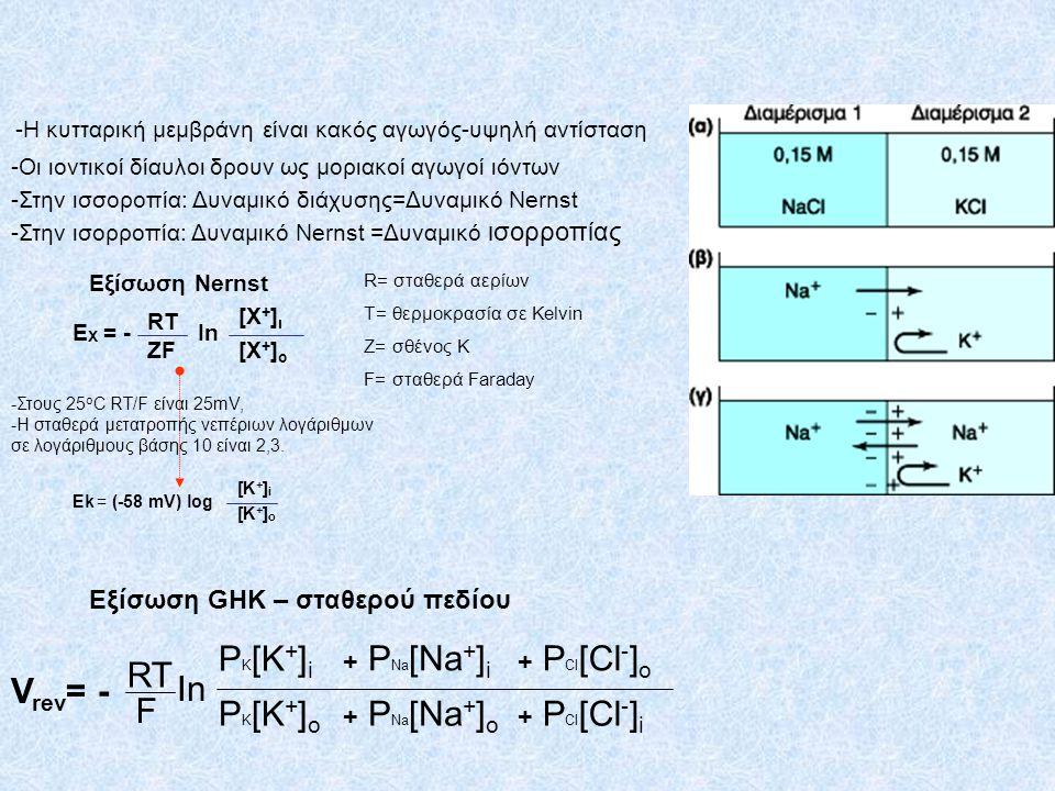 E Χ = - Εξίσωση Nernst RT ZF [Χ+]ι[Χ+]ι [Χ+]ο[Χ+]ο In -Η κυτταρική μεμβράνη είναι κακός αγωγός-υψηλή αντίσταση -Οι ιοντικοί δίαυλοι δρουν ως μοριακοί
