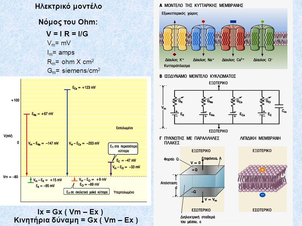 Ηλεκτρικό μοντέλο Νόμος του Ohm: V = I R = I/G V m = mV I m = amps R m = ohm X cm 2 G m = siemens/cm 2 Ix = Gx ( Vm – Ex ) Κινητήρια δύναμη = Gx ( Vm – Ex )