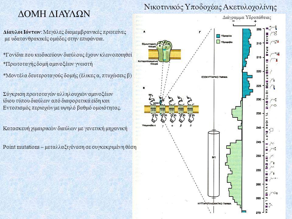 Δίαυλοι Ιόντων: Μεγάλες διαμεμβρανικές πρωτείνες με υδατανθρακικές ομάδες στην επιφάνεια. ΔΟΜΗ ΔΙΑΥΛΩΝ Νικοτινικός Υποδοχέας Ακετυλοχολίνης *Γονίδια π