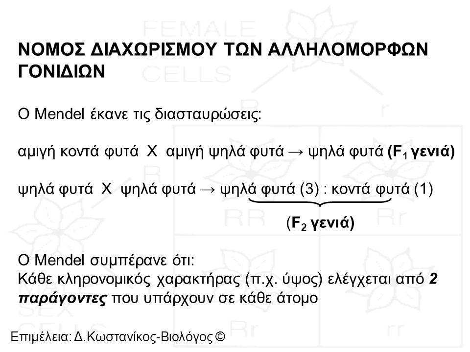 Επιμέλεια: Δ.Κωστανίκος-Βιολόγος © Σήμερα οι κληρονομικοί παράγοντες ονομάζονται γονίδια Αλληλόμορφα γονίδια: γονίδια που βρίσκονται στην ίδια θέση στα ομόλογα χρωμοσώματα και ελέγχουν την ίδια ιδιότητα και τις διαφορετικές μορφές του ίδιου χαρακτήρα Ομόζυγο άτομο: έχει τα ίδια αλληλόμορφα γονίδια για μια ιδιότητα Ετερόζυγο άτομο: έχει δύο διαφορετικά αλληλόμορφα γονίδια για μια ιδιότητα Επικρατές: το αλληλόμορφο που καλύπτει την έκφραση του άλλου Υπολειπόμενο: το αλληλόμορφο που καλύπτεται από την έκφραση του άλλου
