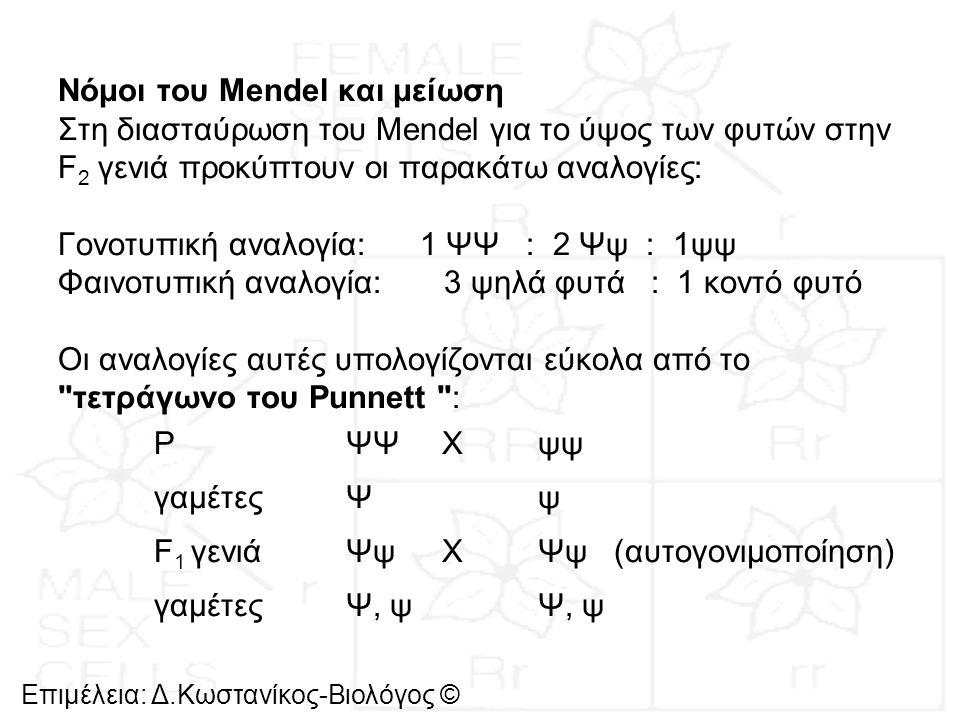 Επιμέλεια: Δ.Κωστανίκος-Βιολόγος © Νόμοι του Mendel και μείωση Στη διασταύρωση του Mendel για το ύψος των φυτών στην F 2 γενιά προκύπτουν οι παρακάτω