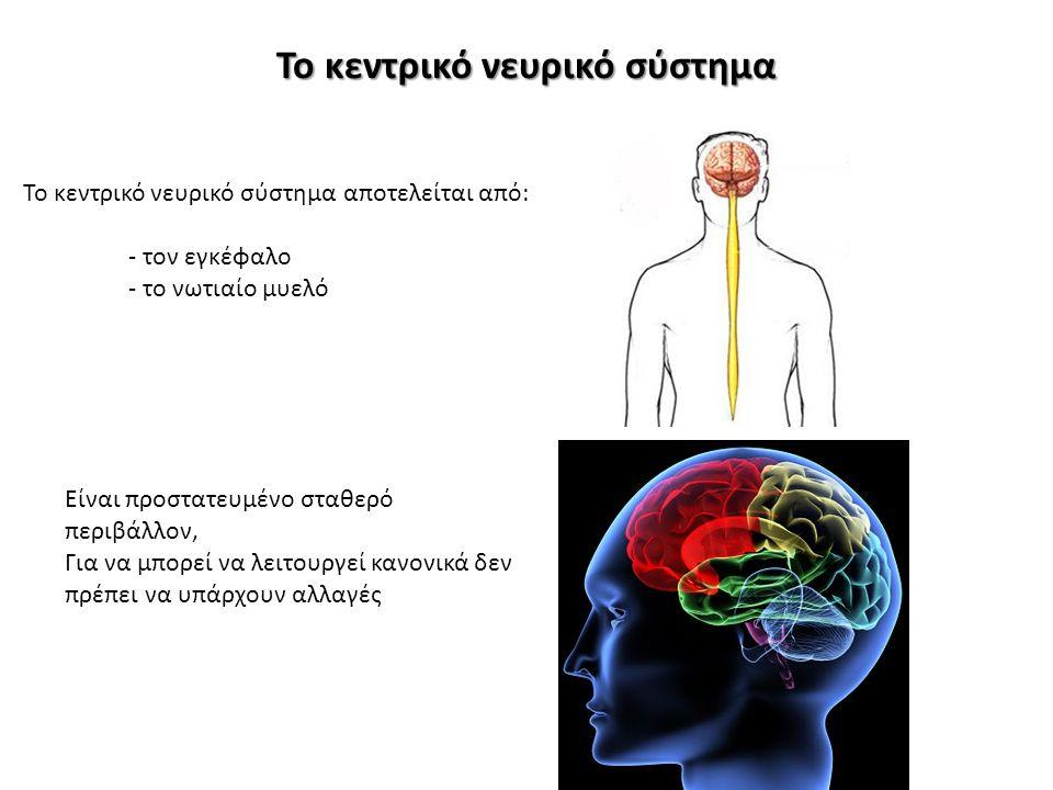 Το κεντρικό νευρικό σύστημα To κεντρικό νευρικό σύστημα αποτελείται από: - τον εγκέφαλο - το νωτιαίο μυελό Είναι προστατευμένο σταθερό περιβάλλον, Για