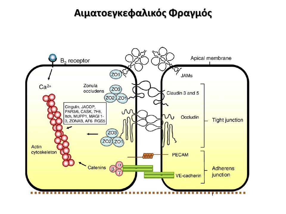 Μικροβίωμα Διεγείρουν κύτταρα του ανοσοποιητικού συστήματος Διεγείρουν κύτταρα του εντέρου-ορμόνες Παράγουν ουσίες Επηρεάζει τους πληθυσμούς βακτηριδίων Επηρεάζει την έκφραση βακτηριακών γονιδίων Επηρεάζει την επικοινωνία μεταξύ βακτηριδίων Βακτηρίδια Εγκέφαλος