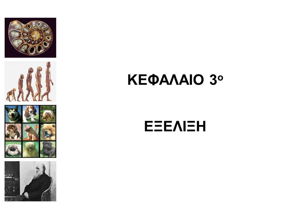 ΚΕΦΑΛΑΙΟ 3 ο ΕΞΕΛΙΞΗ