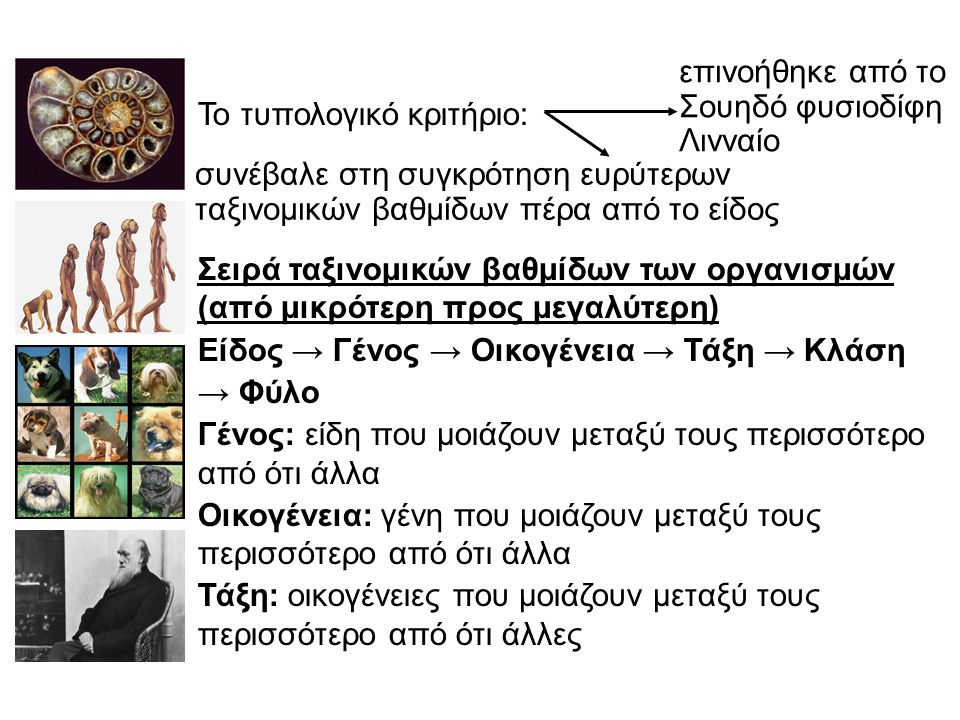 Το τυπολογικό κριτήριο: Σειρά ταξινομικών βαθμίδων των οργανισμών (από μικρότερη προς μεγαλύτερη) Είδος → Γένος → Οικογένεια → Τάξη → Κλάση → Φύλο Γένος: είδη που μοιάζουν μεταξύ τους περισσότερο από ότι άλλα Οικογένεια: γένη που μοιάζουν μεταξύ τους περισσότερο από ότι άλλα Τάξη: οικογένειες που μοιάζουν μεταξύ τους περισσότερο από ότι άλλες επινοήθηκε από το Σουηδό φυσιοδίφη Λινναίο συνέβαλε στη συγκρότηση ευρύτερων ταξινομικών βαθμίδων πέρα από το είδος