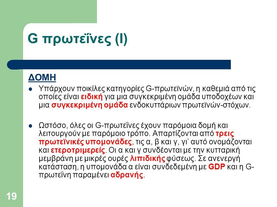 19 G πρωτεΐνες (I) ΔΟΜΗ Υπάρχουν ποικίλες κατηγορίες G-πρωτεϊνών, η καθεμιά από τις οποίες είναι ειδική για μια συγκεκριμένη ομάδα υποδοχέων και μια σ