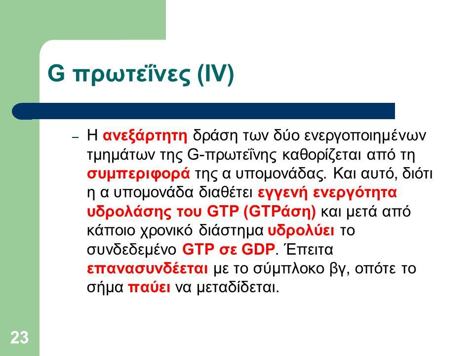 23 G πρωτεΐνες (IV) – Η ανεξάρτητη δράση των δύο ενεργοποιημένων τμημάτων της G-πρωτεΐνης καθορίζεται από τη συμπεριφορά της α υπομονάδας.
