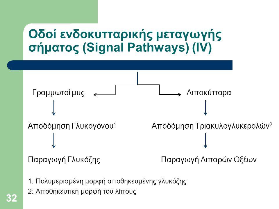 32 Οδοί ενδοκυτταρικής μεταγωγής σήματος (Signal Pathways) (ΙV) Γραμμωτοί μυς Λιποκύτταρα Αποδόμηση Γλυκογόνου 1 Αποδόμηση Τριακυλογλυκερολών 2 Παραγωγή Γλυκόζης Παραγωγή Λιπαρών Οξέων 1: Πολυμερισμένη μορφή αποθηκευμένης γλυκόζης 2: Αποθηκευτική μορφή του λίπους