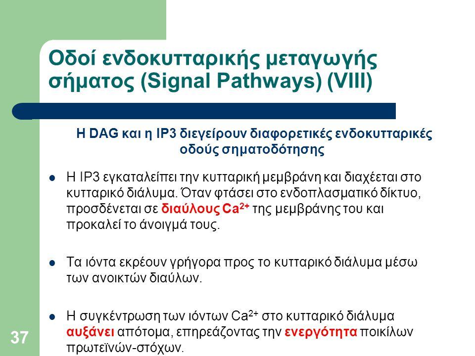 37 Οδοί ενδοκυτταρικής μεταγωγής σήματος (Signal Pathways) (VIIΙ) Η DAG και η IP3 διεγείρουν διαφορετικές ενδοκυτταρικές οδούς σηματοδότησης Η IP3 εγκαταλείπει την κυτταρική μεμβράνη και διαχέεται στο κυτταρικό διάλυμα.