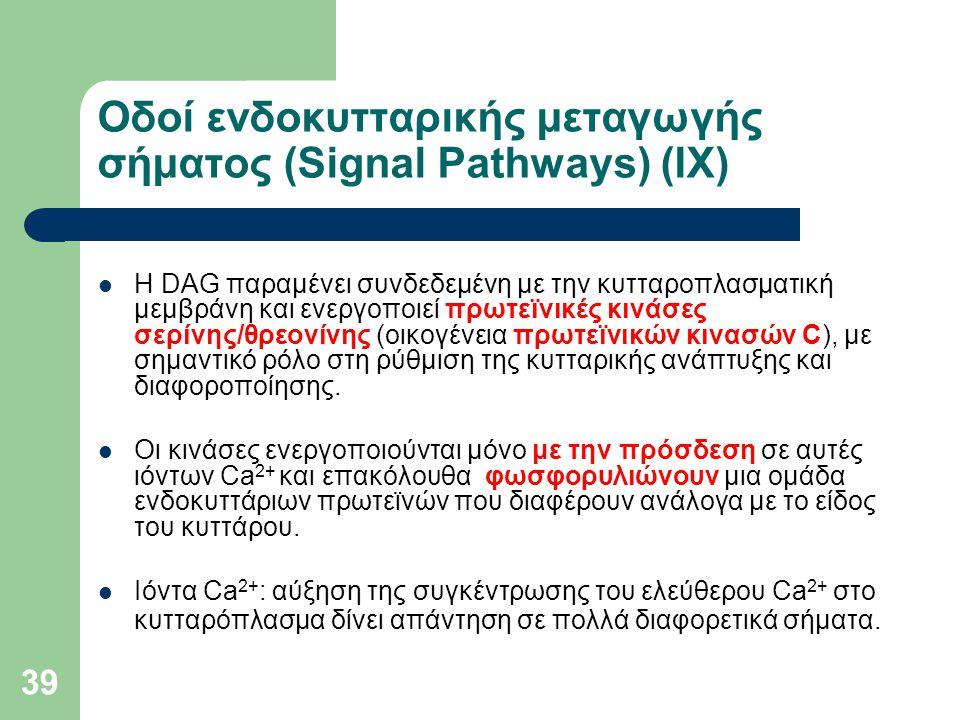 39 Οδοί ενδοκυτταρικής μεταγωγής σήματος (Signal Pathways) (IΧ) Η DAG παραμένει συνδεδεμένη με την κυτταροπλασματική μεμβράνη και ενεργοποιεί πρωτεϊνι