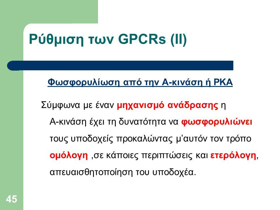 45 Ρύθμιση των GPCRs (ΙI) Φωσφορυλίωση από την Α-κινάση ή ΡΚΑ Σύμφωνα με έναν μηχανισμό ανάδρασης η Α-κινάση έχει τη δυνατότητα να φωσφορυλιώνει τους υποδοχείς προκαλώντας μ'αυτόν τον τρόπο ομόλογη,σε κάποιες περιπτώσεις και ετερόλογη, απευαισθητοποίηση του υποδοχέα.