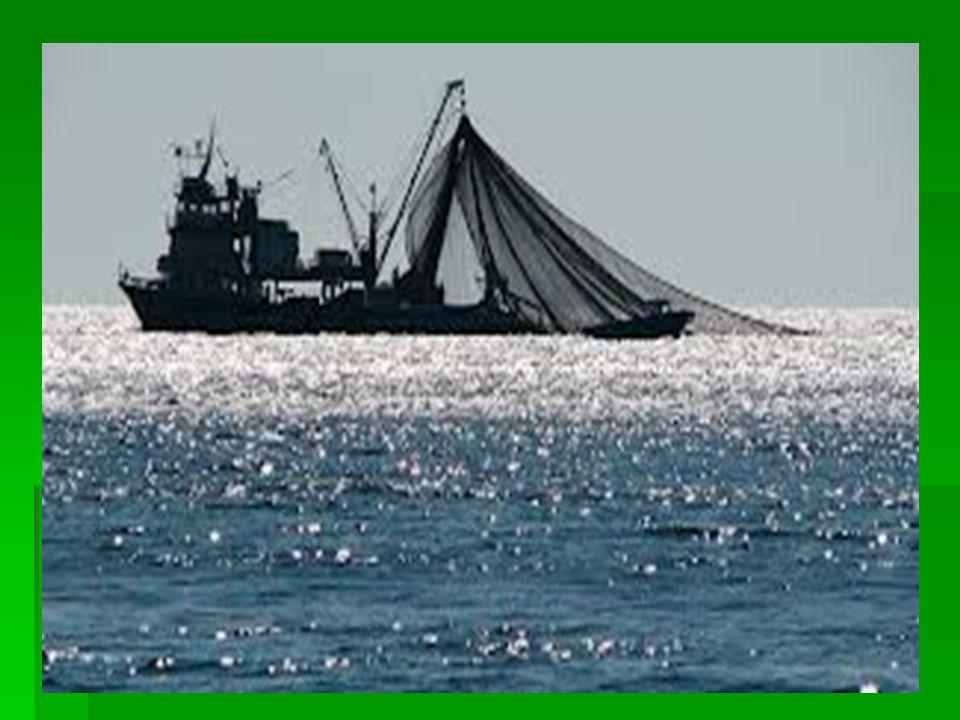 Αλιεία στην παλιά εποχή Η αλιεία είναι μια πανάρχαια πρακτική που χρονολογείται τουλάχιστον από την Ανώτερη Παλαιολιθική Εποχή, πριν περίπου 40.000 χρόνια.