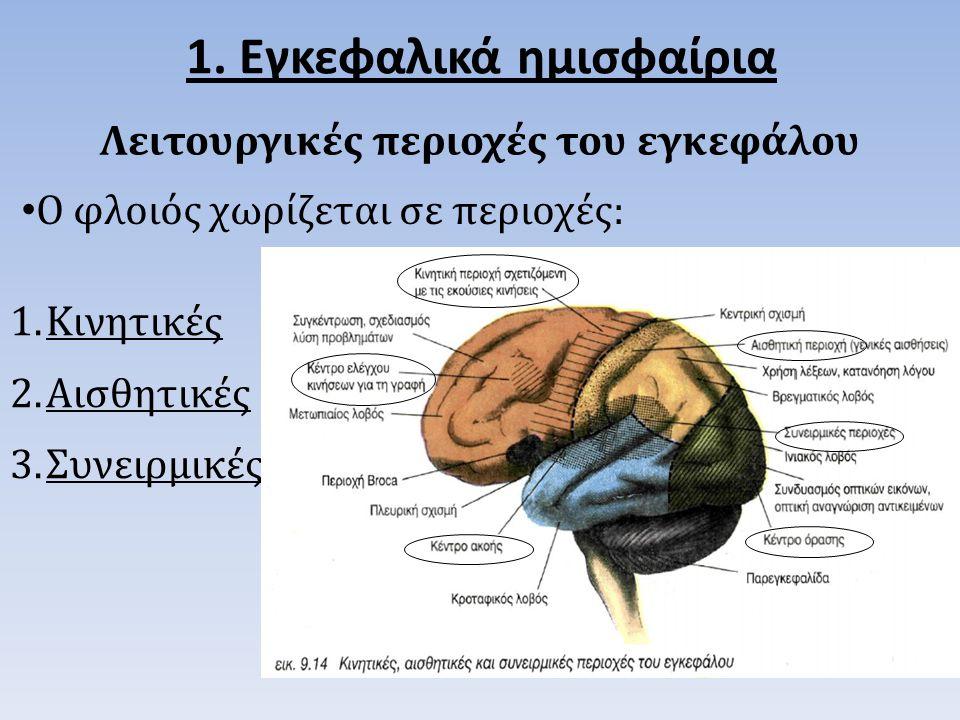 Λειτουργικές περιοχές του εγκεφάλου 1.Κινητικές 2.Αισθητικές 3.Συνειρμικές 1.
