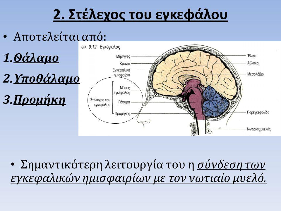 2. Στέλεχος του εγκεφάλου Αποτελείται από: 1.Θάλαμο 2.Υποθάλαμο 3.Προμήκη Σημαντικότερη λειτουργία του η σύνδεση των εγκεφαλικών ημισφαιρίων με τον νω