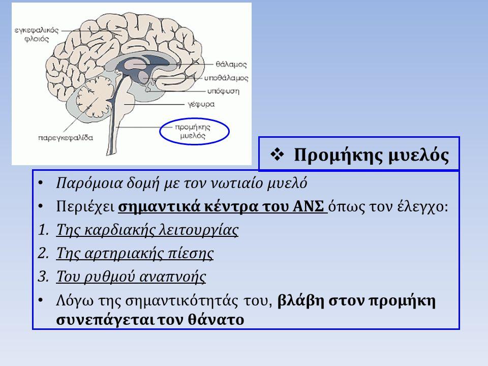  Προμήκης μυελός Παρόμοια δομή με τον νωτιαίο μυελό Περιέχει σημαντικά κέντρα του ΑΝΣ όπως τον έλεγχο: 1.Της καρδιακής λειτουργίας 2.Της αρτηριακής πίεσης 3.Του ρυθμού αναπνοής Λόγω της σημαντικότητάς του, βλάβη στον προμήκη συνεπάγεται τον θάνατο