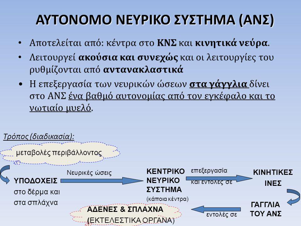 ΑΥΤΟΝΟΜΟ ΝΕΥΡΙΚΟ ΣΥΣΤΗΜΑ (ΑΝΣ) Αποτελείται από: κέντρα στο ΚΝΣ και κινητικά νεύρα.