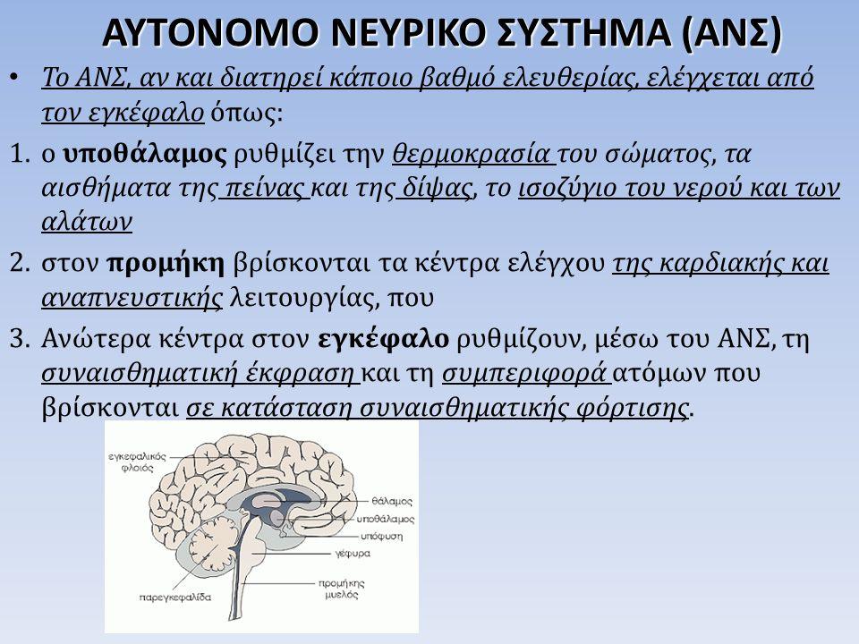 Το ΑΝΣ, αν και διατηρεί κάποιο βαθμό ελευθερίας, ελέγχεται από τον εγκέφαλο όπως: 1.ο υποθάλαμος ρυθμίζει την θερμοκρασία του σώματος, τα αισθήματα της πείνας και της δίψας, το ισοζύγιο του νερού και των αλάτων 2.στον προμήκη βρίσκονται τα κέντρα ελέγχου της καρδιακής και αναπνευστικής λειτουργίας, που 3.Ανώτερα κέντρα στον εγκέφαλο ρυθμίζουν, μέσω του ΑΝΣ, τη συναισθηματική έκφραση και τη συμπεριφορά ατόμων που βρίσκονται σε κατάσταση συναισθηματικής φόρτισης.