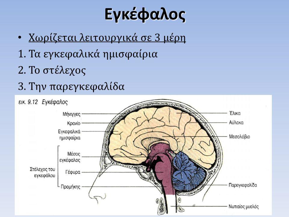 Χωρίζεται λειτουργικά σε 3 μέρη 1.Τα εγκεφαλικά ημισφαίρια 2.Το στέλεχος 3.Την παρεγκεφαλίδαΕγκέφαλος