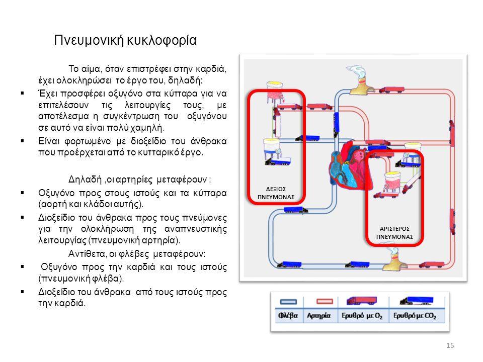 Πνευμονική κυκλοφορία Το αίμα, όταν επιστρέφει στην καρδιά, έχει ολοκληρώσει το έργο του, δηλαδή:  Έχει προσφέρει οξυγόνο στα κύτταρα για να επιτελέσ