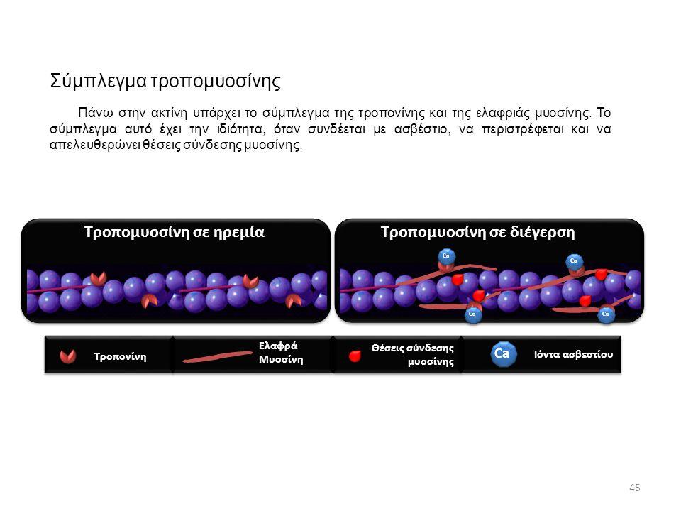 Σύμπλεγμα τροπομυοσίνης Τροπονίνη Ελαφρά Μυοσίνη Ca Ιόντα ασβεστίου Ca Θέσεις σύνδεσης μυοσίνης Τροπομυοσίνη σε ηρεμίαΤροπομυοσίνη σε διέγερση 45 Πάνω