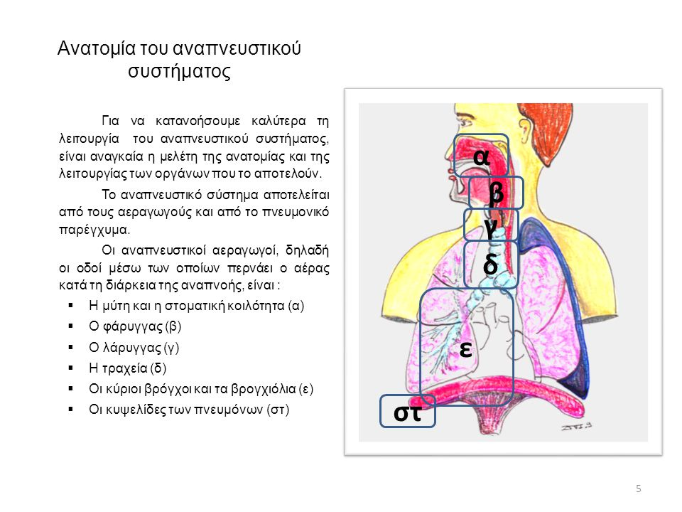 Οι είσοδοι του αέρα στο ανθρώπινο σώμα Οι είσοδοι του αέρα στο ανθρώπινο σώμα είναι η μύτη και το στόμα.